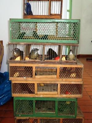 Pássaros silvestres são apreendidos (Foto: Divulgação/Polícia Militar)