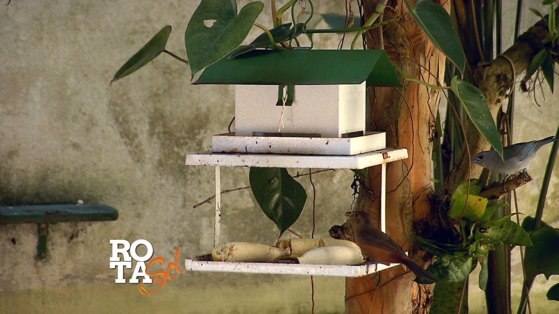 Pássaros são alimentados dentro dos prédios (Foto: Reprodução/TV Tribuna)