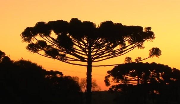Meu Paraná Araucária (Foto: Reprodução/ RPC TV)