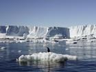 Mudanças climáticas ameaçam espécies marinhas na Antártida
