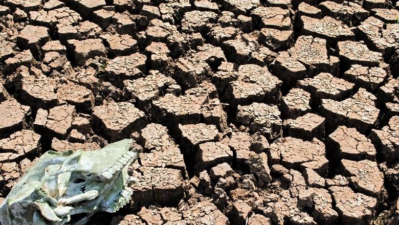 agricultura_solo_seca (Foto: Robispierre Giuliani/Ed. Globo)