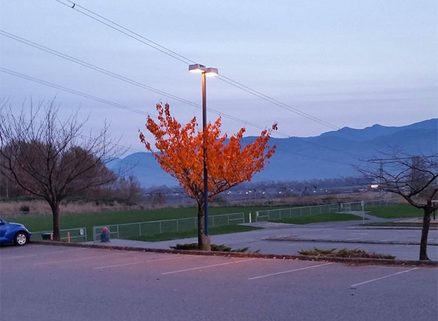 No inverno, esta árvore é a única que ainda tem suas folhas, por conta da luz que fica sobre ela (Foto: Reprodução)