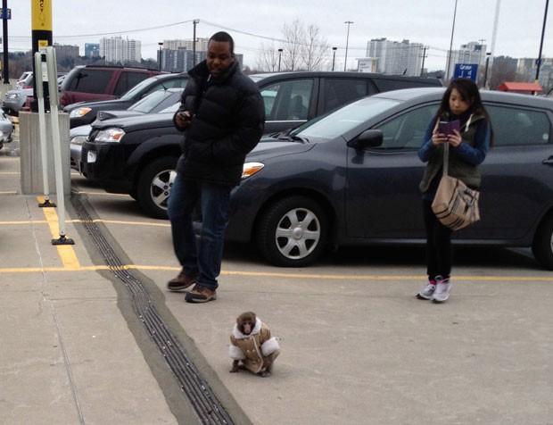 Animal escapou de gaiola que estava dentro de carro estacionado. (Foto: Canadian Press/AP)