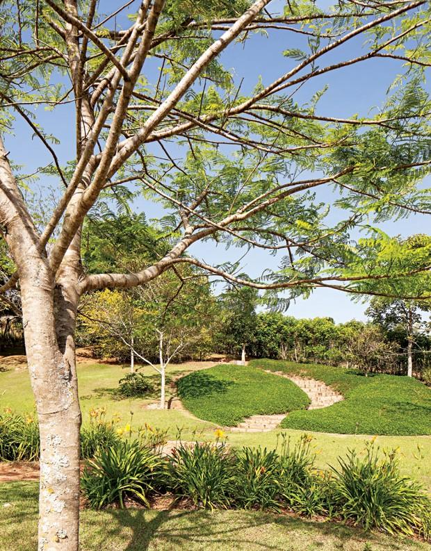 Flamboyant | A árvore, paixão do morador Antônio, foi uma das primeiras espécies plantadas no terreno. Na sequência, canteiro de lírios e, ao fundo, caminho com bordadura de grama-amendoim (Foto: Gui Morelli)
