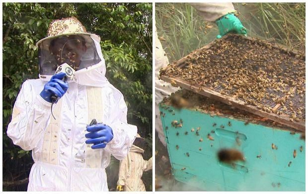 Geilso Pinho encarou o desafio e entrou em contato com diversas abelhas (Foto: Bom Dia Amazônia)