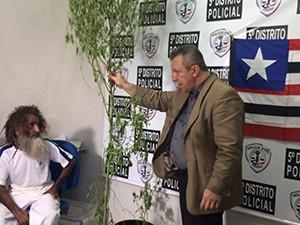 Delegado Walter Wanderlei segura pé de maconha na casa do homem conhecido como Bin Laden (Foto: Marcial Lima /  TV Mirante)