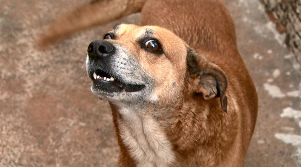 O cachorro Dudu salvou a vítima de ataque do pit bull Roque em Ribeirão Preto, SP (Foto: Luciano Tolentino/EPTV)