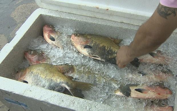 Variedade de pescados atrai consumidores (Foto: Amazônia TV)