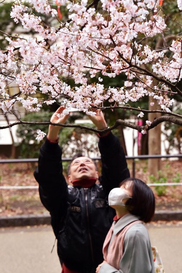 Japoneses observam cerejeira florida em parque de Tóquio (Foto: Yoshikazu Tsuno/AFP)