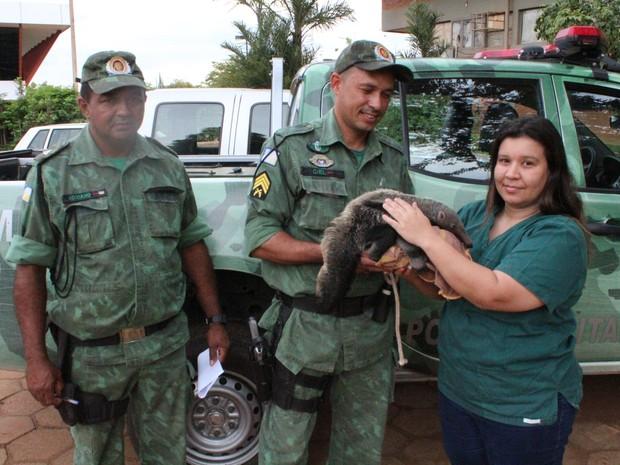 Animal foi para o Cetas em Araguaína (Foto: Naturatins/Divulgação)