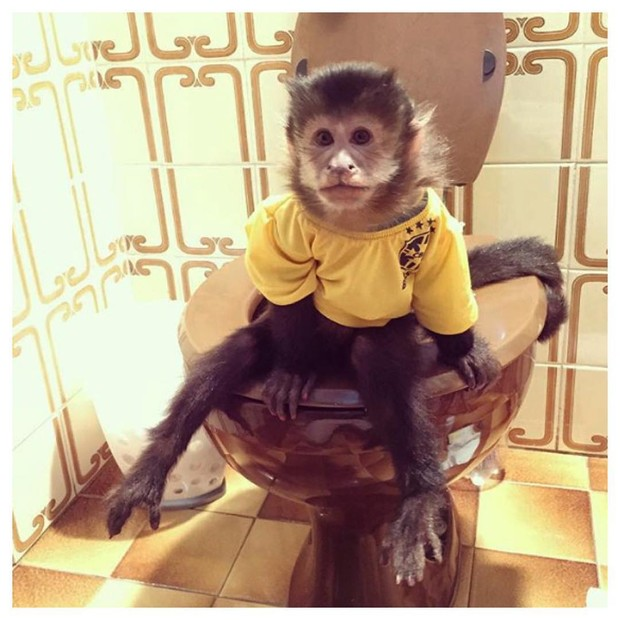 Twelves, mico de Latino (Foto: Reprodução/Instagram)