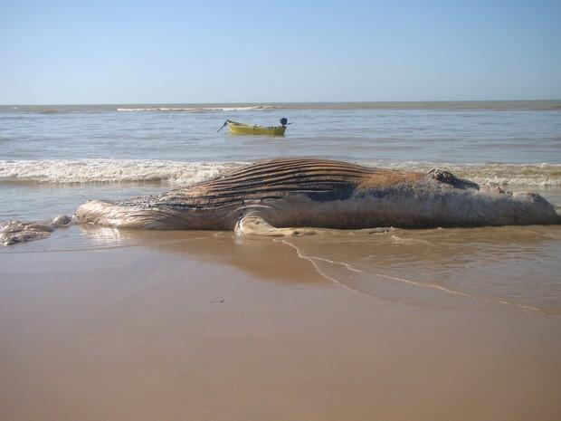 Animal foi encontrado na manhã deste domingo (3), na praia de Buena em São Francisco (Foto: Blog do Paulo Noel)
