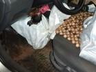 Homem é flagrado transportando galos de rinha em Guaíra, no Paraná