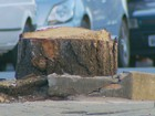 Derrubada de árvores gera polêmica entre moradores de Areado, MG