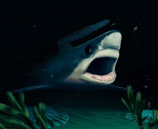 Ilustração mostra espécie de tubarão que pode ter sobrevivido ao período chamado de Grande Extinção (Foto: Alain Beneteau/Nature/AFP)