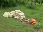 Programa incentiva investimento na agricultura orgânica no RJ