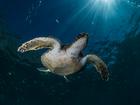 Cabo Frio recebe mergulhadores para Torneio de Fotografia Subaquática