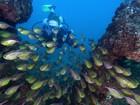 Mergulho é opção para turistas na BA (Karine Virgolo / Dive Bahia / Divulgação)