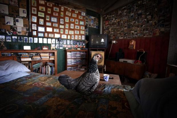 Lindy Haynes deixa os animais dormirem na casa (Foto: David Gray/Reuters)