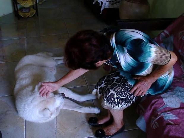 Cão segue passos de dono morto há um ano em Caçapava do Sul, no RS (Foto: Reprodução/RBS TV)