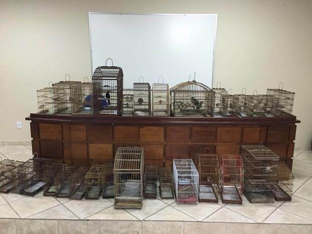 Mais de 30 aves silvestres foram apreendidas no final da manhã desta quinta-feira, 30. (Foto: Divulgação/Polícia Civil)