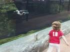 Menina faz sucesso ao brincar com pinguim em zoológico nos EUA