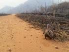 Queimadas matam animais silvestres no interior de Roraima