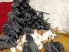 Japoneses encontram maneiras inusitadas para comemorar o Dia do Gato