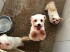 Cães e gatos apreendidos em ação da PF vão a leilão por R$ 134 mil em RO