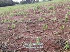 Vendaval e granizo causam estragos em Antônio Olinto, no sul do Paraná