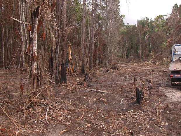 Semma estima 2 mil metros de área desmatada. (Foto: Semma/ Divulgação)