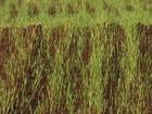 Paraná reduz área plantada de trigo (Reprodução/RPC)