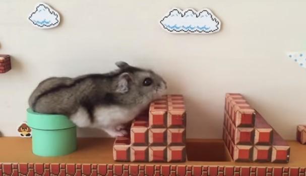 Hamster vira Mario em desafio Nintendo (Foto: Reprodução/ Youtube)