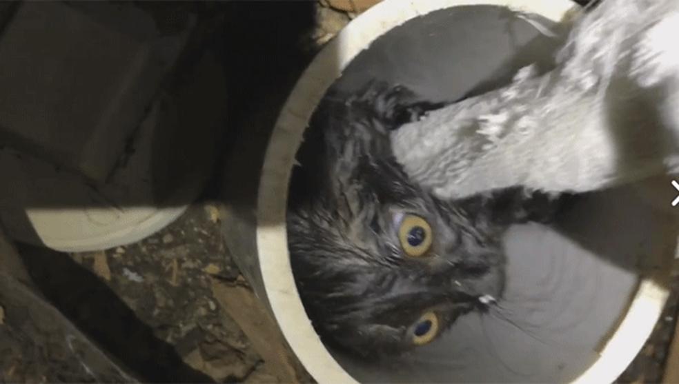 Bombeiros usam 'teresa' para salvar gatinho preso em cano nos EUA (Foto: Aurora Fire Rescue/Facebook)