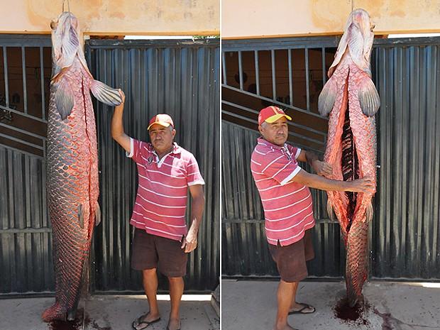 Peixe pirarucu pesava 110 quilos e 2,20 metros de comprimento (Foto: Jailton Silva/ portaldeuruçui)