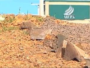 Falta de pavimentação também incomoda (Foto: Reprodução/RBS TV)