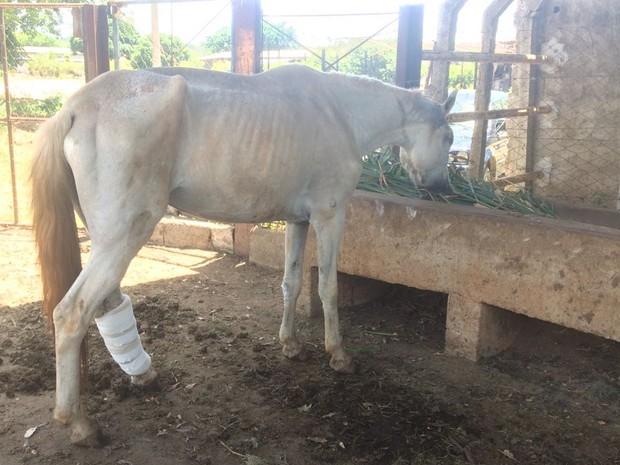 Égua foi resgatada com pata ferida e cega após levar machadadas (Foto: Mariana Flausino/Arquivo Pessoal)