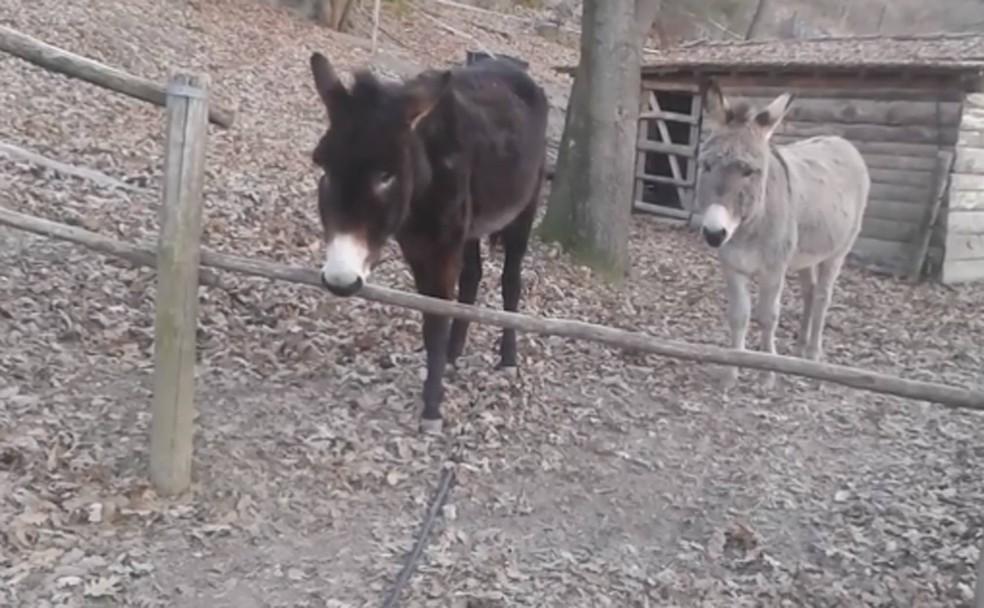 Esperto, burro abriu a porteira, em vez de saltar (Foto: Reprodução/Facebook/Paradase onlus )