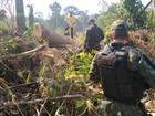 Homem é preso por crime ambiental em ramal de Rio Branco