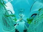 Casamento debaixo d'água em Bora Bora tem 'capela', flores e padre