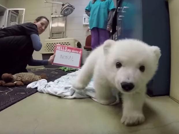 Nora com apenas algumas semanas de vida, ao ser oficialmente apresentada pelo Columbus Zoo (Foto: Reprodução/Youtube/Columbus Zoo)