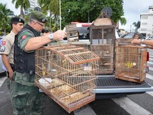 Operação resgatou 18 aves em João Pessoa (Foto: Walter Paparazzo/G1)