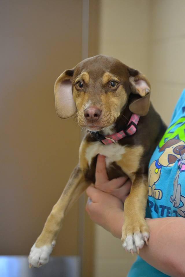 Peanut foi ao resgate de uma criança após encontrá-la em péssimas condições (Foto: Reprodução/Facebook/Delta Animal Shelter)