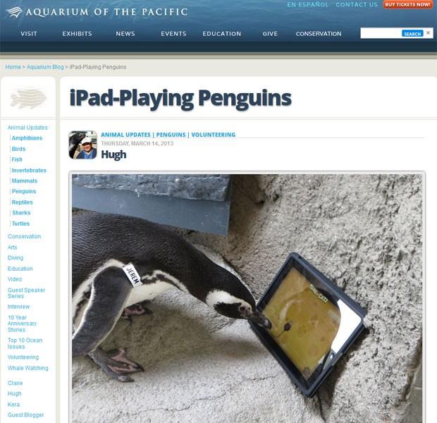 Pinguins brincam com iPad em aquário da Califórnia (Foto: Reprodução)