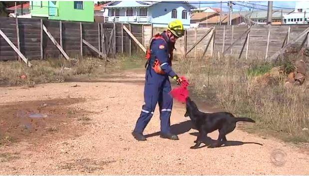 Barney é treinado em Lages pelos bombeiros (Foto: Reprodução RBS TV)