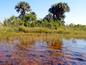 APA do Guariroba foi criada em 1995 para proteger as nascentes da principal fonte de água de Campo Grande (Foto: Anderson Viegas/Do Agrodebate)