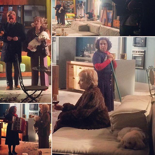 Cena de um dos cachorros da agência Bichos Artistas com Gloria Menezes em 'Totalmente Demais' (Foto: Reprodução)
