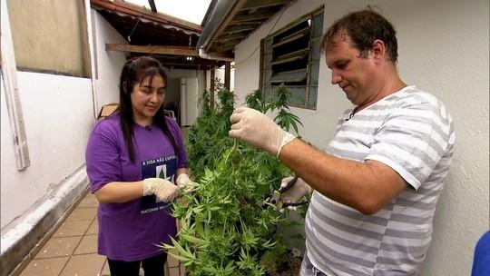 Família é autorizada pela Justiça a plantar maconha medicinal