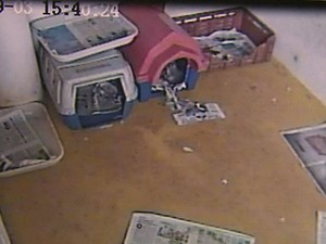 Dona de canil diz que 39 animais foram levados por ladrões (Foto: Reprodução/ Circuito interno de segurança)