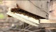 Criadores de abelhas comemoram Caatinga mais florida